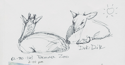 Dik-dik animal sketch