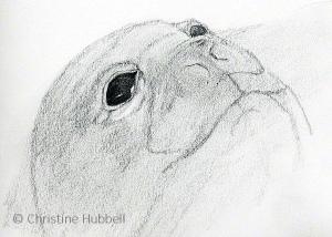 Seal face