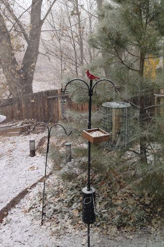 Bird feeders in the snow