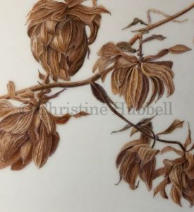 An illustration of dried hop flowers