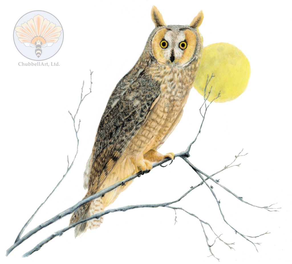 Color pencil illustration of a Long-eared owl positioned slightly in front of the full moon, perched in an active position on a slender branch