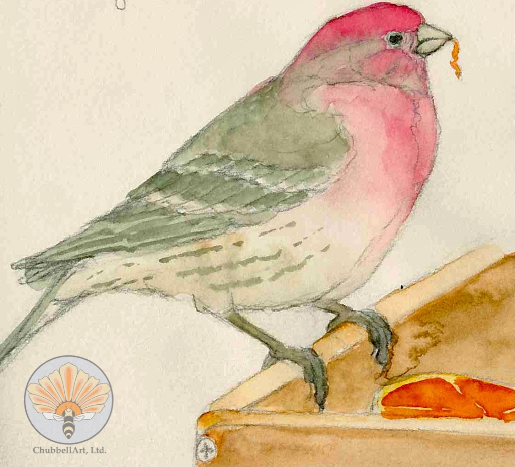 Pencil and water color sketch of a House Finch eating an orange from a feeder tray. Illustrates the application of water color to a pencil sketch.