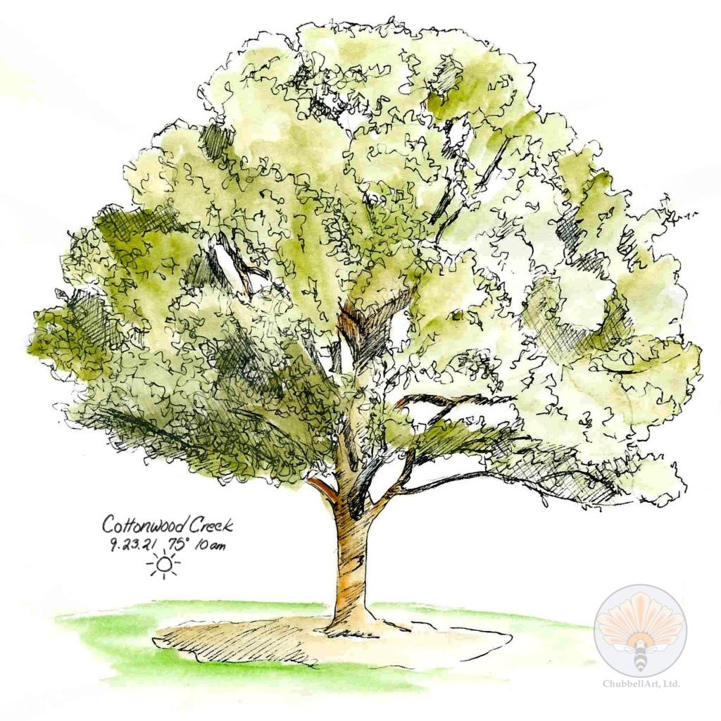 Nature journal sketch of an oak tree